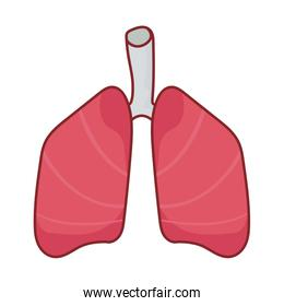 lungs organ flat style icon vector design