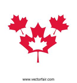 canada day, red maple leaves national symbol flat style icon