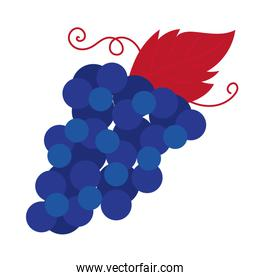 grapes fruit hand draw style icon
