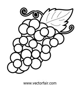 grapes fruit line style icon