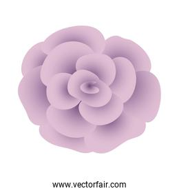 beautiful rose flower plant isolated icon