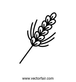 ears of wheat icon, line style