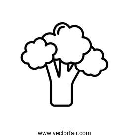 broccoli vegetable icon, line style