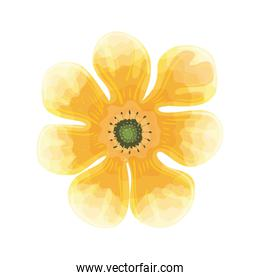 flower yellow color, spring concept on white background