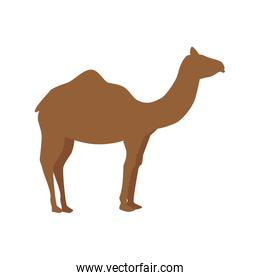 silhouette camel in walking pose on white background