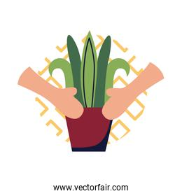 Hands with plant inside pot flat style icon vector design