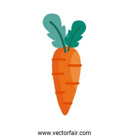 carrot detail style icon vector design