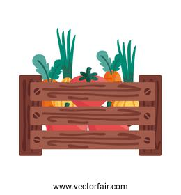 tomatoes carrots and onions inside box detail style icon vector design