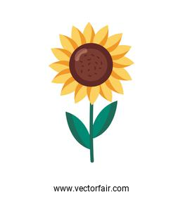 sunflower detail style icon vector design