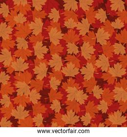 Autumn maple leaves background vector design