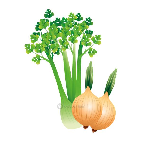 celery and onion vegetable vector design