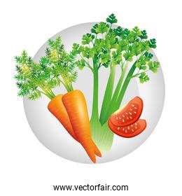 carrot celery and tomato vector design