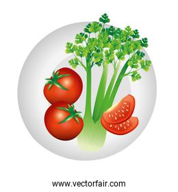 celery and tomato vegetable vector design