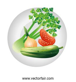 celery onion tomato and cucumber vegetable vector design