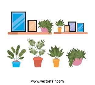 Isolated home frames and plants inside pots on shelves vector design