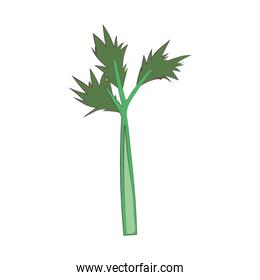 celery vegetable fresh nutrition healthy food isolated icon design