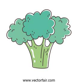 broccoli organic vegetable fresh nutrition healthy food isolated icon design
