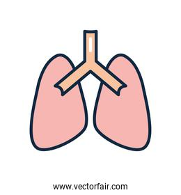 lungs organ icon, line color style