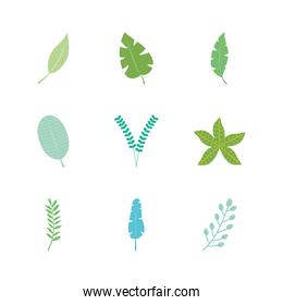 icon set of tropical leaves and exoctic leaves, flat style