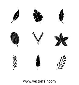 icon set of tropical leaves and exoctic leaves, silhouette style