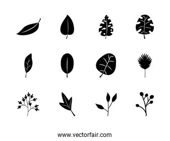 palm leaves and tropical leaves icon set, silhouette style