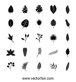 icon set of tropical leaves banana palm leaf, silhouette style