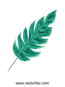 Isolated natural green leaf vector design