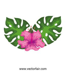 hibiscus beautiful pink color with leaves, tropical nature, spring summer botanical