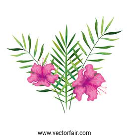 hibiscus flowers pink color with branches and leaves, tropical nature, spring summer botanical