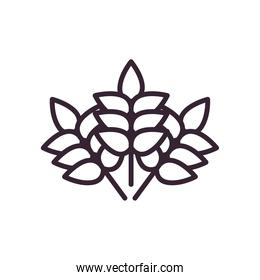 Wheat ears line style icon vector design