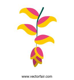 heliconia flower icon, flat style
