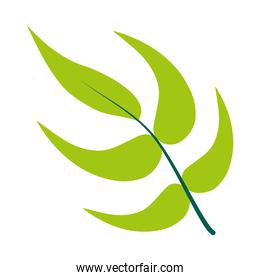 heliconia leaves icon, flat style