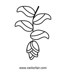 heliconia flower icon, line style