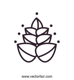 Isolated leaves line style icon vector design