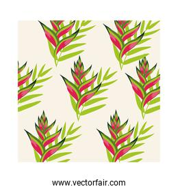 heliconias plants tropical pattern background