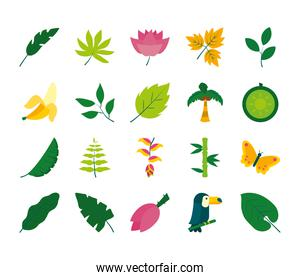 tropical leaves and fruits icon set, flat style