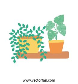 potted plants decoration in shelf isolated icon white background