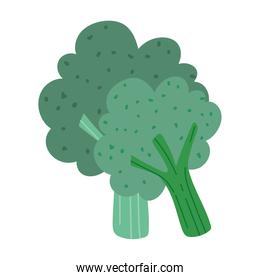 broccoli vegetable fresh nutrition food isolated icon design