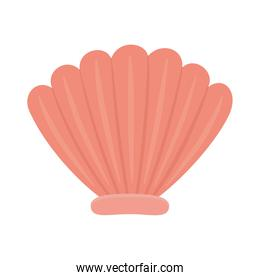 sea shell tropical natural isolated design icon