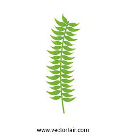 Isolated green leaf vector design