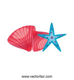 Isolated sea shells and star vector design