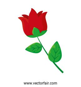 red rose icon, colorful design
