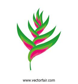 heliconia flower icon, colorful design