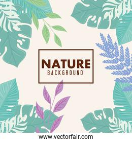 nature background, frame of tropical nature with branches and leaves of pastel color