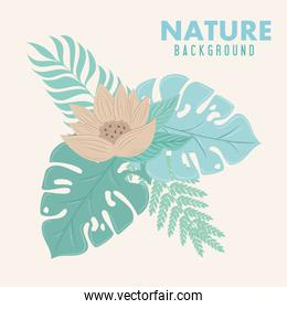 nature background, flower of color pastel with tropical leaves