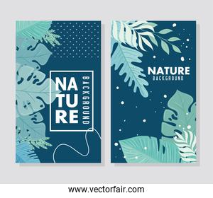set of nature background, branches with tropical nature leaves of pastel color