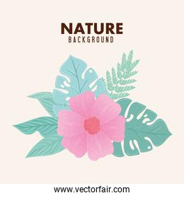 nature background, flower of pink color pastel with tropical leaves