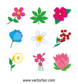 lotus flower and and colorful flowers icon set, colorful design