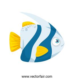 sea underwater life, cute fish, blue and white color with tail and fins yellow color, on white background