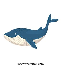 sea underwater life, blue whale animal on white background